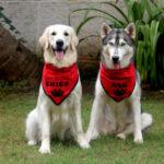 Messenger Pup Surprise