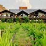 Tour along Sula Vineyards