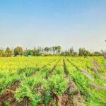 Tour along Sula Vineyards (4)