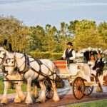 Chariot Ride Surprise